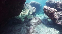 A sea turtle in a cavity of the reef Pacific ocean - stock footage
