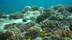 Corals ocean floor Pacific ocean French Polynesia Stock Footage