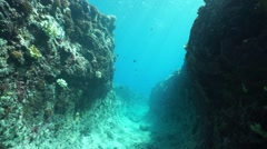 Moving in natural trench underwater Pacific ocean Stock Footage