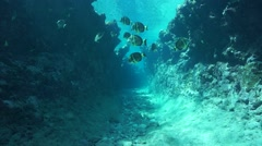 Moving with fish in natural trench underwater sea - stock footage