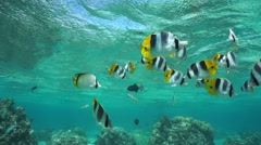 Shoal of tropical fish under water surface - stock footage