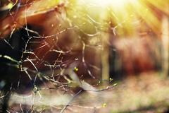 Horizontal spring branches with light leak bokeh background Stock Photos