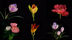 Composition of many blooming flowers Timelapse 4k - stock footage