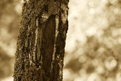 Vertical sepia tree background Stock Photos