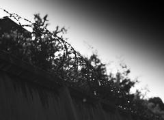Diagonal jail barbed wire bokeh background - stock photo