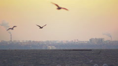 Gulls flying on the background of the industrial plant. Slow motion. Stock Footage