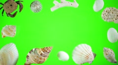 Seashells and Sand on a Green Screen Stock Footage