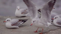 Seagull close-up sitting on the bank. Slow motion. Stock Footage
