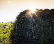 Horizontal vibrant sunset hay stack sun flare background backdro Kuvituskuvat
