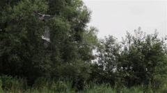 pairing heron - stock footage