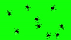 Swarm of spiders, CG animated silhouettes on green screen, seamless loop Stock Footage