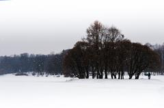 Horizontal falling snow in winter park background backdrop Kuvituskuvat