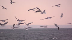 Seagulls hover slowly in the sky. Slow motion. Stock Footage