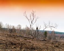 Horizontal vivid orange burned tree background backdrop Kuvituskuvat