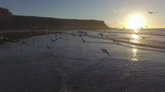Hundreds Flying Sea Gulls at Sunset Aerial Shot Stock Footage