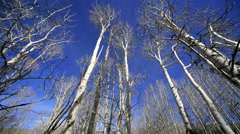 Aspen Trees and Clouds, Utah - stock footage