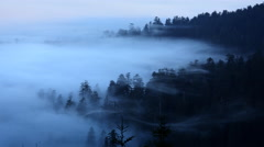 Fog wafting through Redwoods in Redwood NP, CA Stock Footage