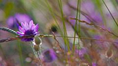Wildflowers grow in the sun. Stock Footage