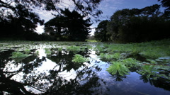Pond in City Park, Golden Gate Park, San Francisco, CA Stock Footage