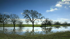 Oak Trees reflected in Pond, Sonoma, CA - stock footage