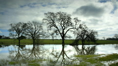 Oak Trees reflected in Pond, Sonoma, CA Stock Footage