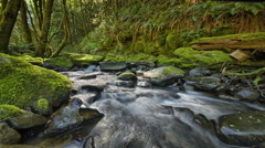 Stream in forest with moss and ferns, Oregon - stock footage