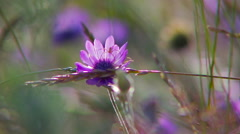 Wildflowers swaying in the wind. Stock Footage