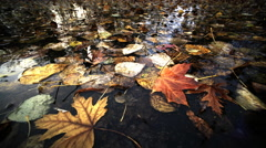 Pond reflecting trees with Autumn color, Oregon Stock Footage