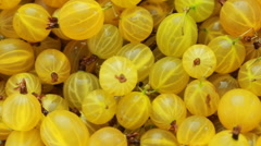 Solar berry gooseberries Rotation Stock Footage