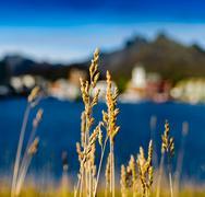 Square vivid vibrant rye bokeh fjord mountain background backdro Kuvituskuvat
