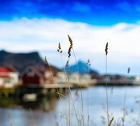 Horizontal vivid vibrant rye bokeh fjord mountain background bac Kuvituskuvat
