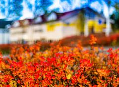 Horizontal vibrant autumn house blur abstraction background back Stock Photos