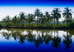 Horizontal vibrant dramatic palms in a row with reflections land Kuvituskuvat