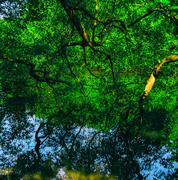 Square vivid indian jungle forest water reflections background b Stock Photos