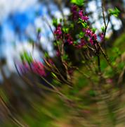 Vertical purple flowers bokeh zoom abstraction Stock Photos