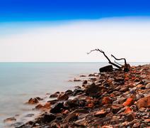 Horizontal vivid tree snag on rocky beach bokeh background backd Stock Photos