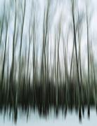 Vertical motion blur trees art abstraction backdrop - stock illustration