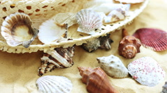 Sea Shell on the Sand Stock Footage