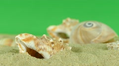 Shell on beach with green screen 4k Footage Stock Footage