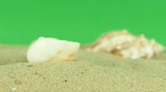 Shell on beach with green screen 4k Footage Arkistovideo
