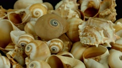 Shell on black 4k Footage Stock Footage