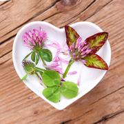 Homeopathy and cooking with red clover Stock Photos
