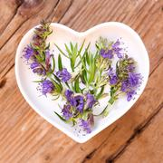 Homeopathy and cooking with hyssop Stock Photos