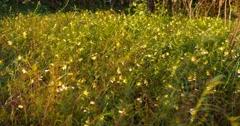 Flower meadow field in windy day 4k Stock Footage