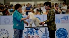 Judge examining dog on the World Dog Show Stock Footage