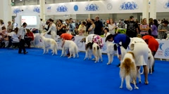 Participants in the ring on the World Dog Show Stock Footage