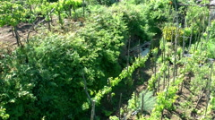 Vineyard and garden in Anacapri, shot from cable car from Monte Solaro, Naples Stock Footage