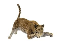3D Rendering Big Cat Leopard Stock Illustration