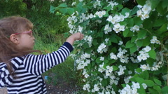 Girl child touches the jasmine bush. Stock Footage