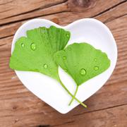 Homeopathy and cooking with ginkgo - stock photo